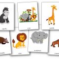 Flashcards Good Night Gorilla