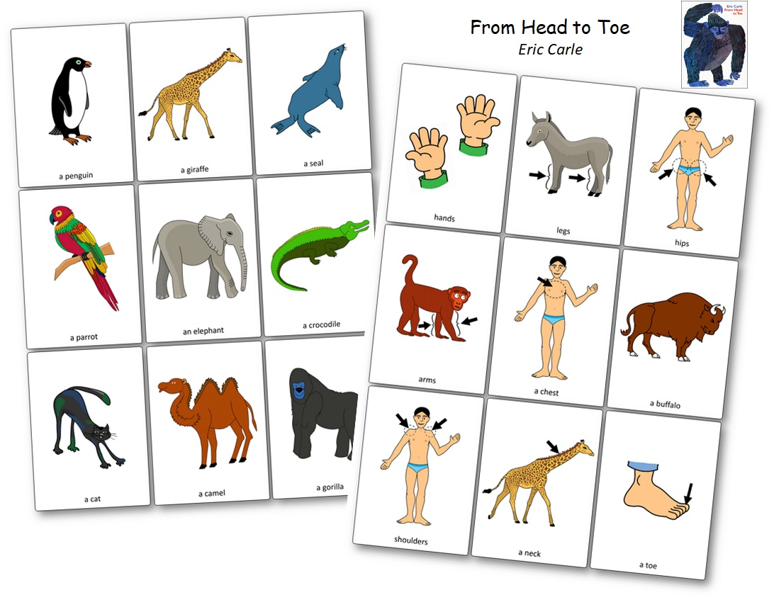 Flashcards From Head to Toe Imagier Eric Carle
